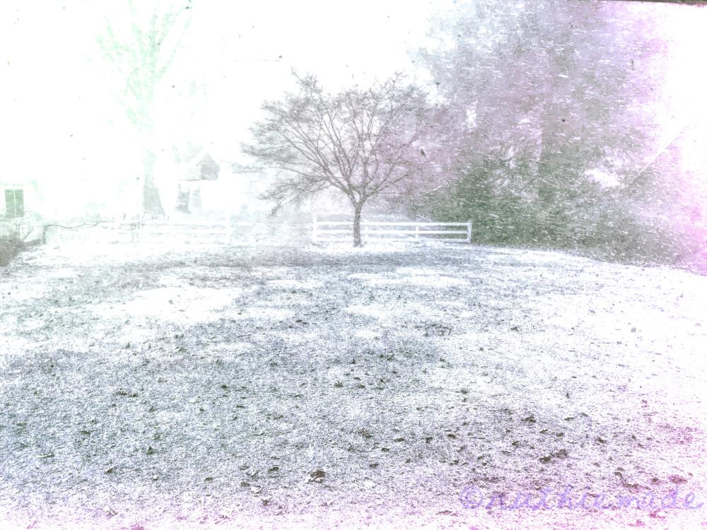 SNowy day in my backyard