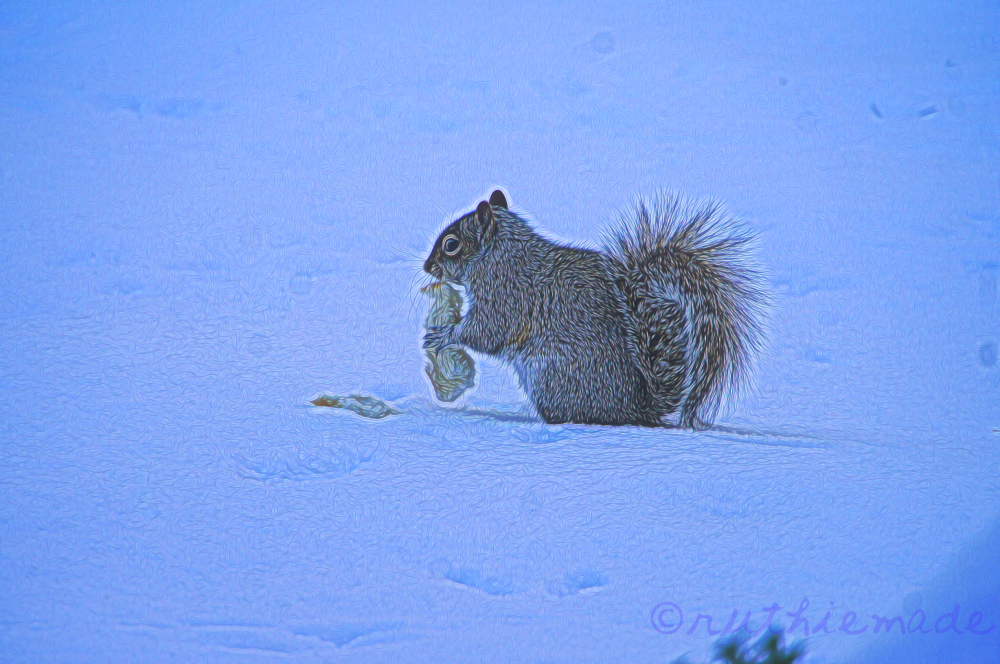 Squirrel in Snow