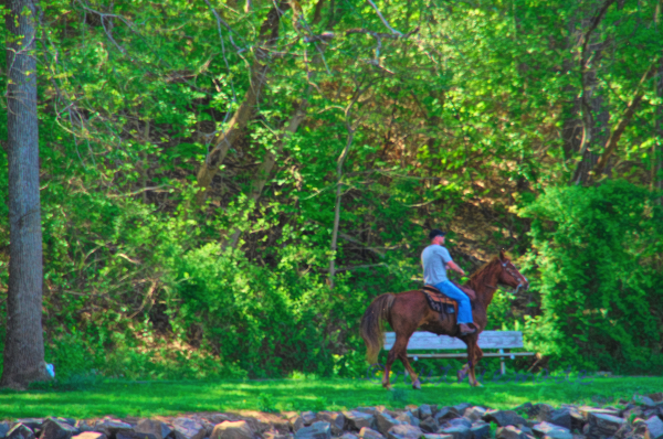 Horse Ride in Park