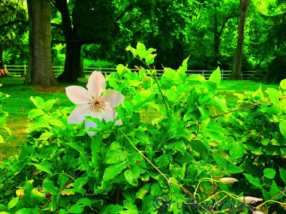 MOnday Flower 5/6