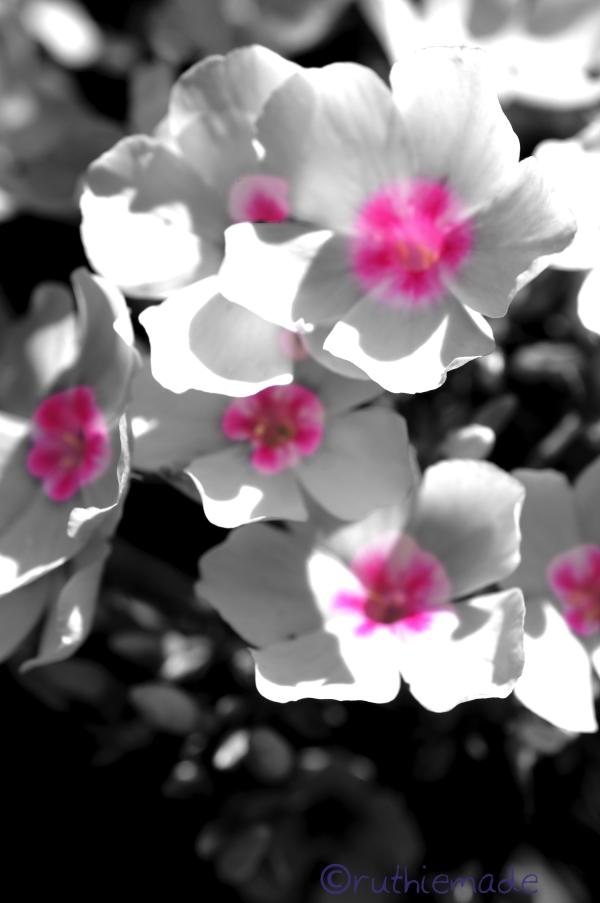 MOnday Flower 5/13