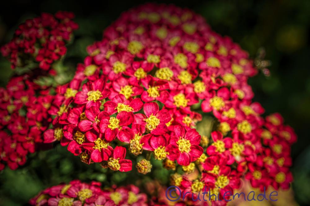 MOnday Flower 5/20