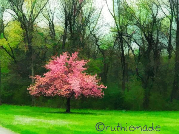 Tree in Park