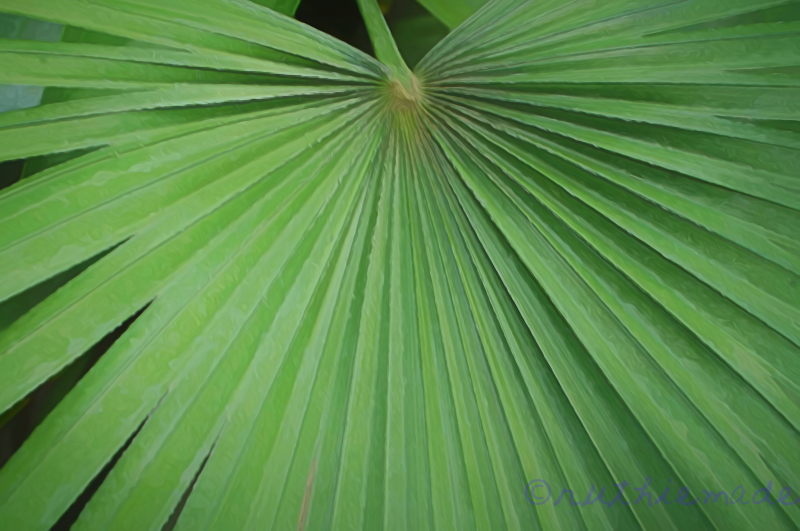 Hosanna   Palm Sunday 2019
