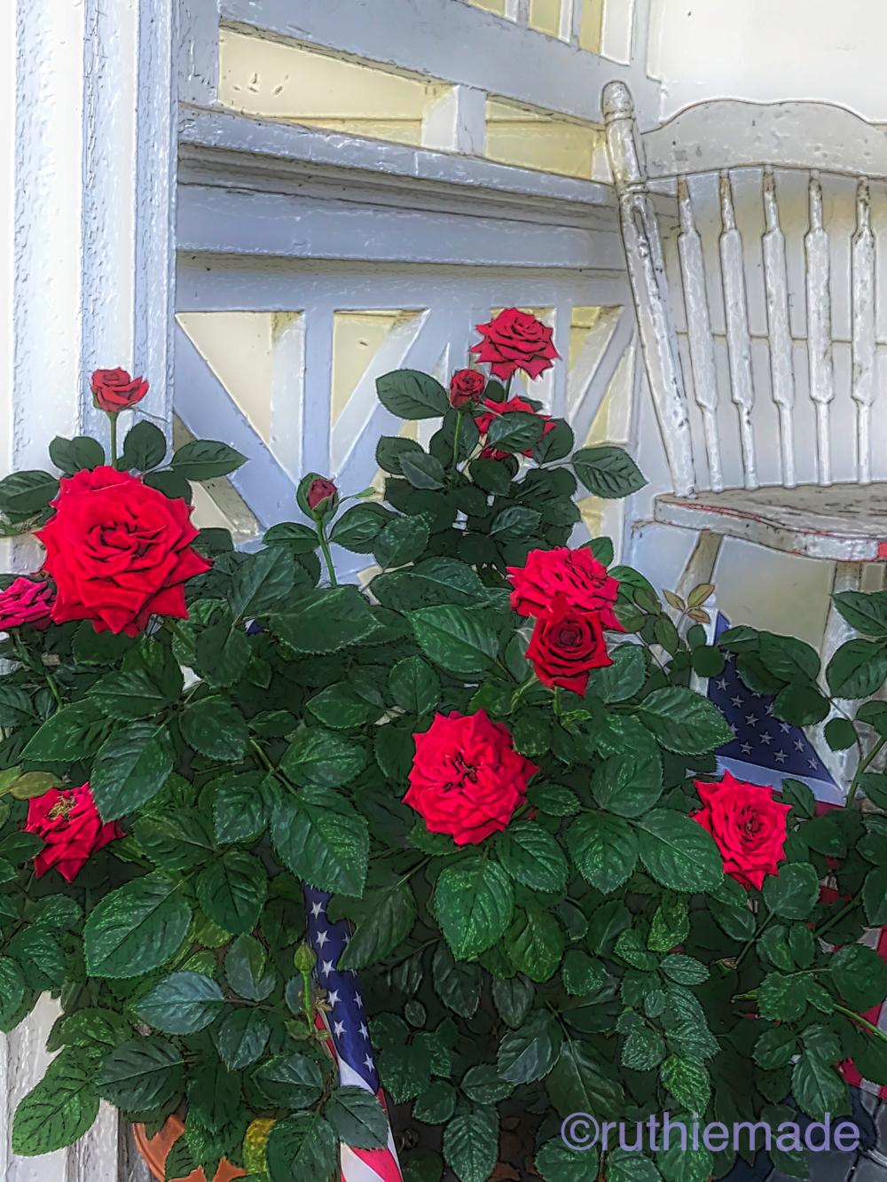 Pot roses