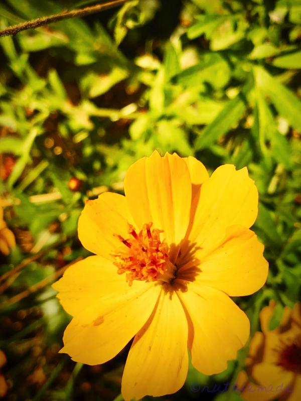 Fall Flower