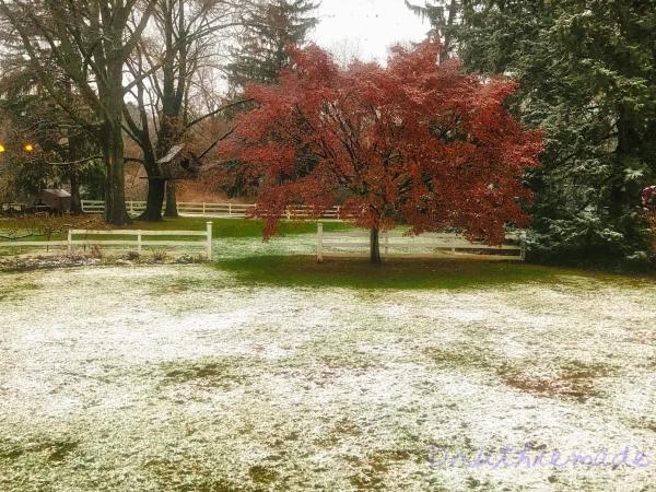 Wintery Morn