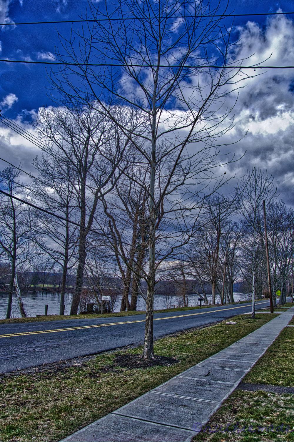 February Sycamore Tree