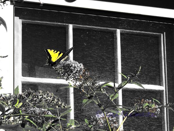 Butterfly n Garden