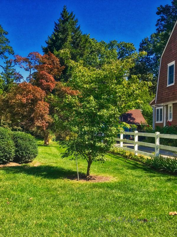 September Dogwood Tree