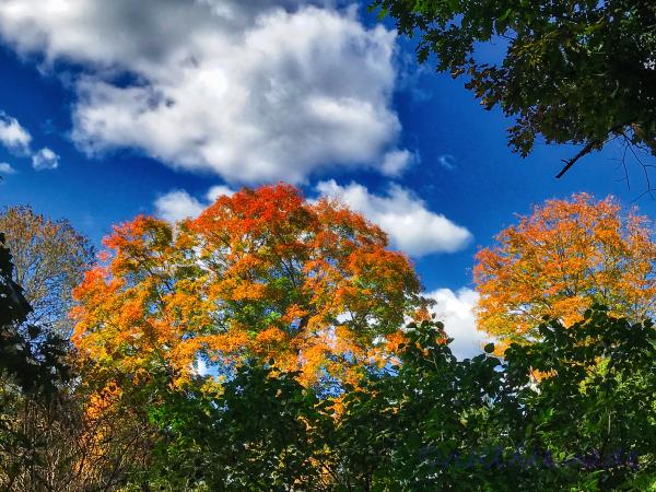 Looking Like Fall