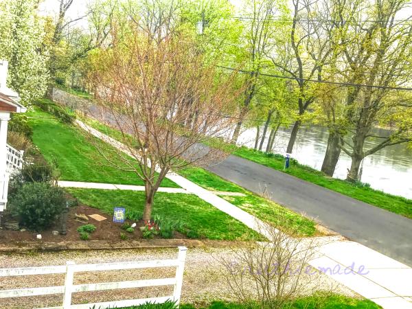 WIndow view of my street