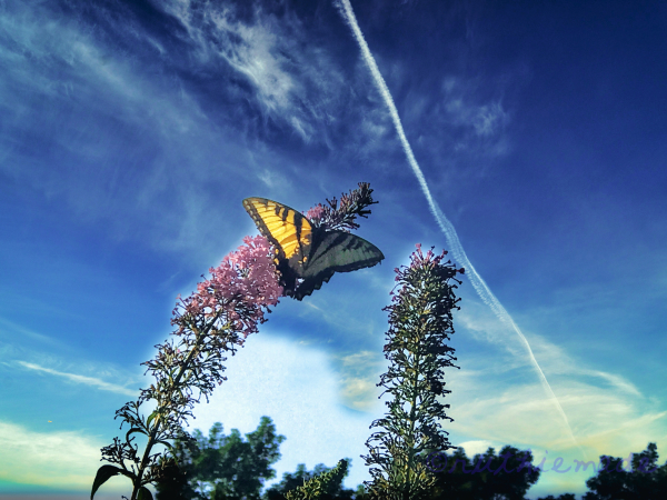 Blue Sky and Butterfly