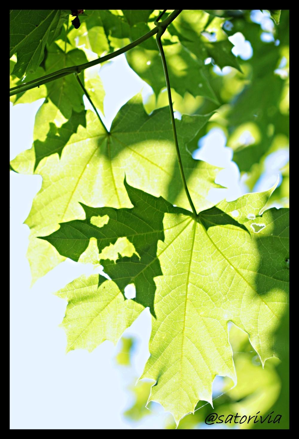 Leaves or shark