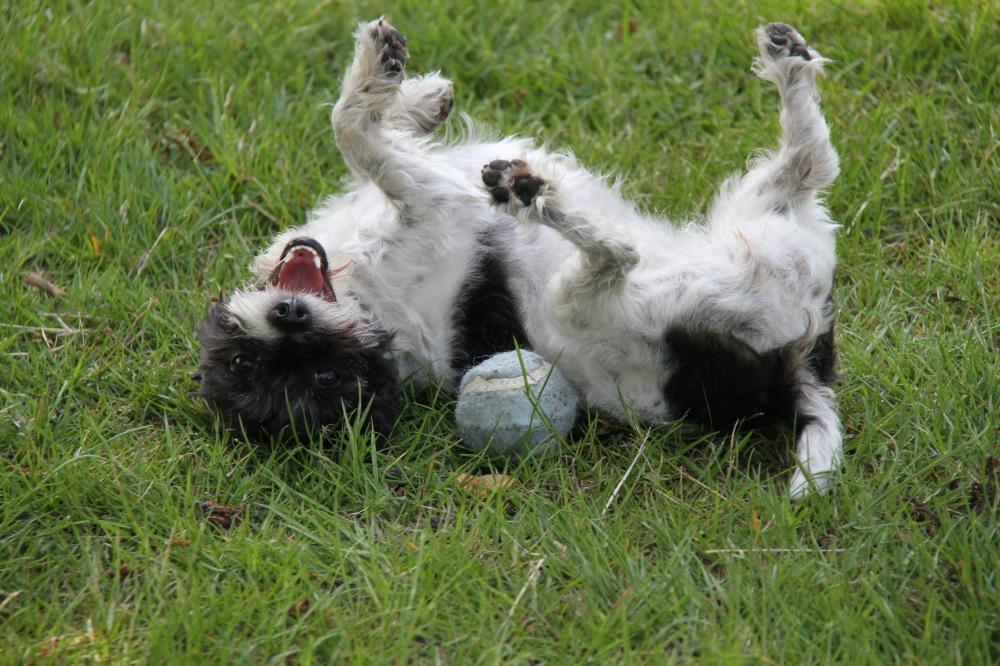 naughty dog....