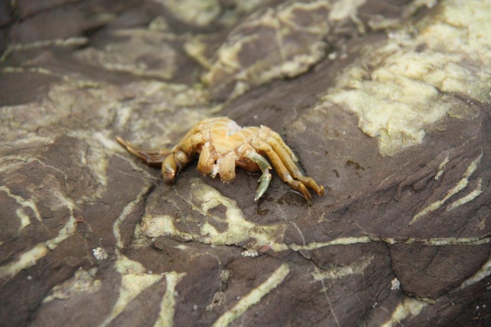 Crab skin peel...