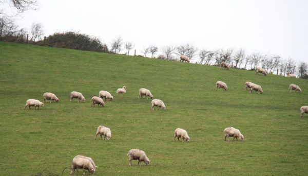 Silent of lambs ....
