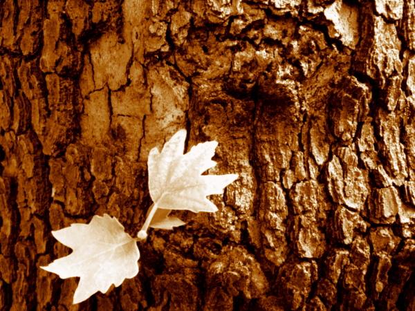 leaf, hug