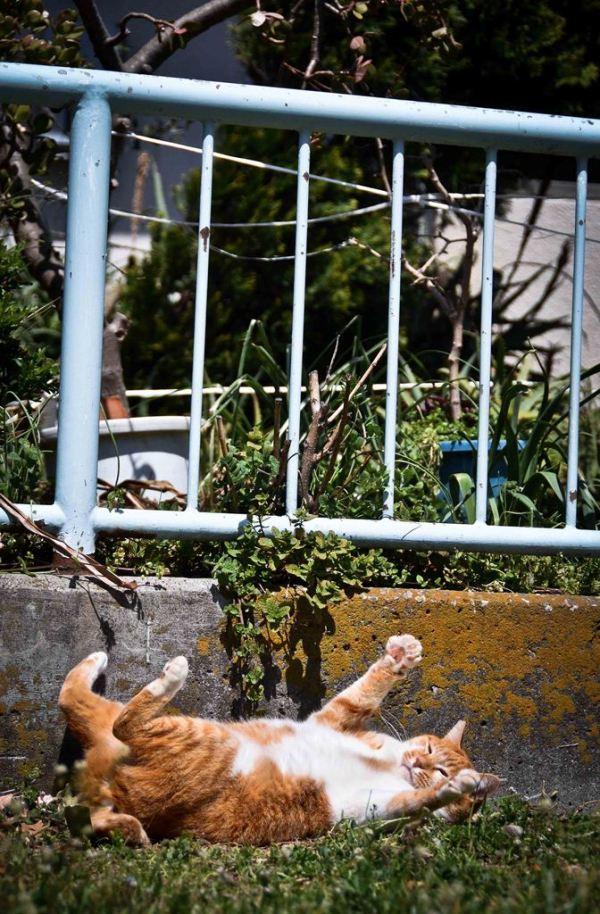 Lovely street cat tokyo