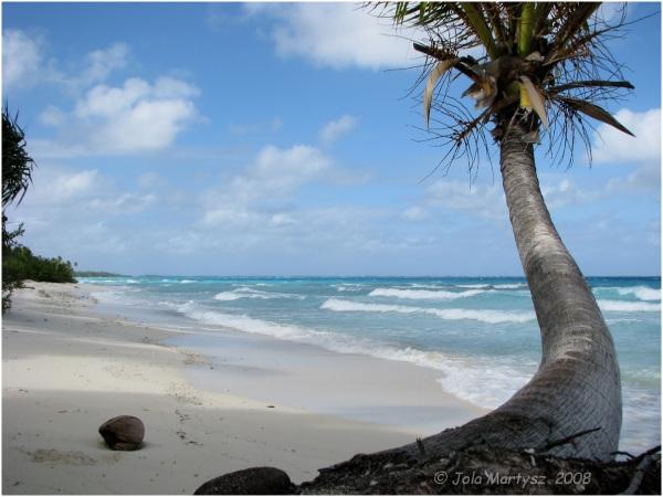 palm tree beach Tuamotus sea water sand cocosnut n
