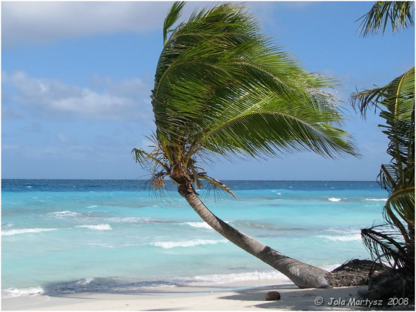 wind, palm, tree, against, blue, ocean, water