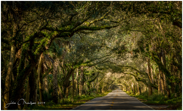 Rural road in the Central Florida, USA.