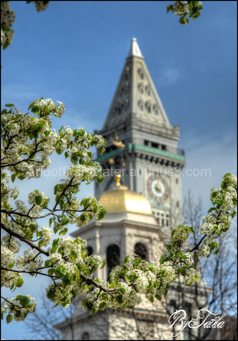 city,boston,building,flag