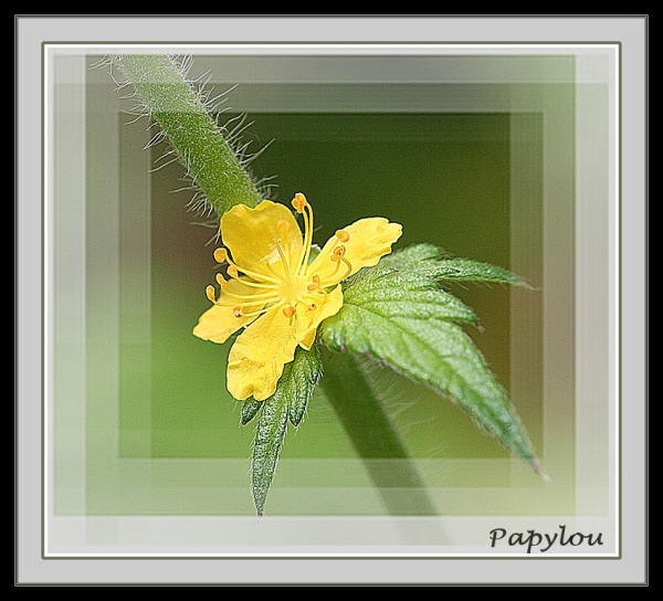 Fleur de l'été 2008