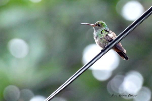 Costa-Rica 23