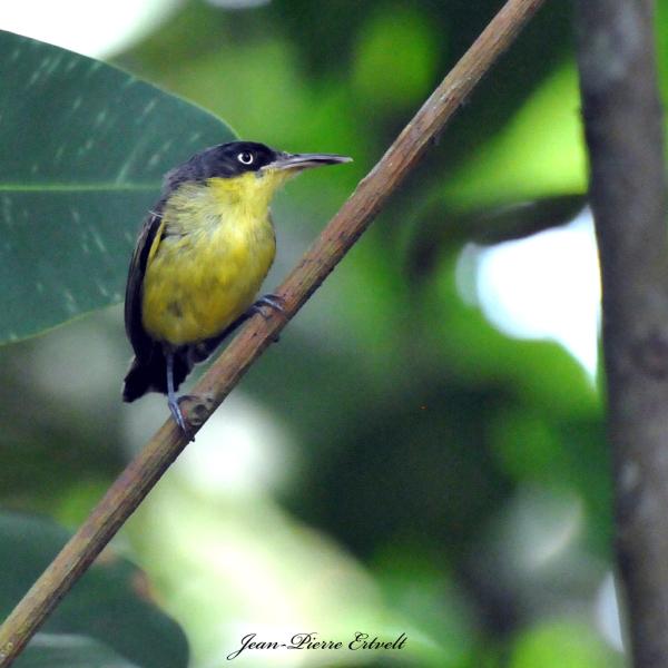 Costa-Rica 25