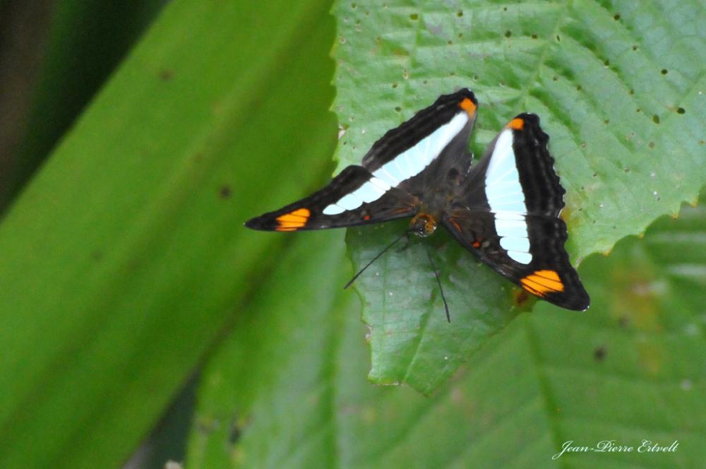 Costa-Rica 26
