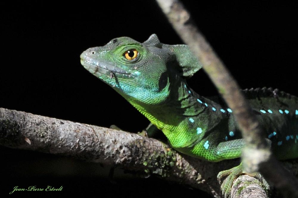 Costa-Rica 29