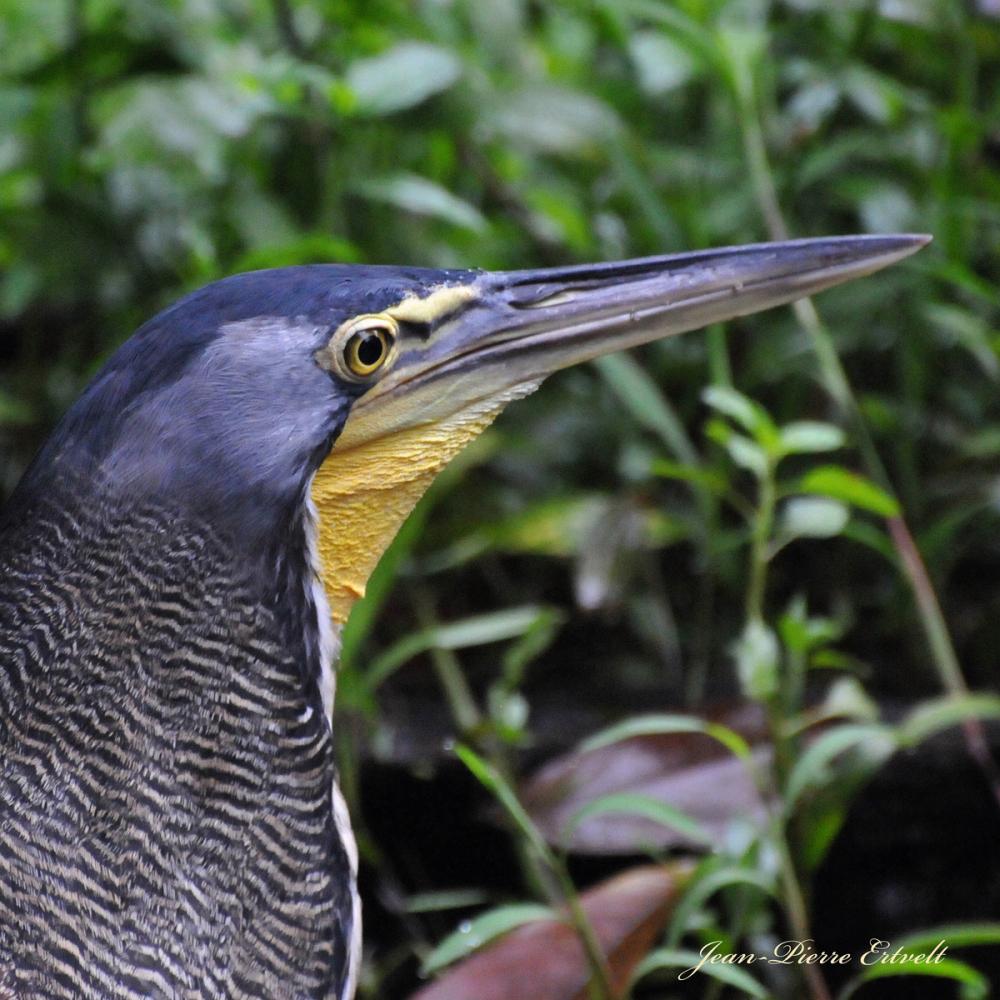 Costa Rica 53