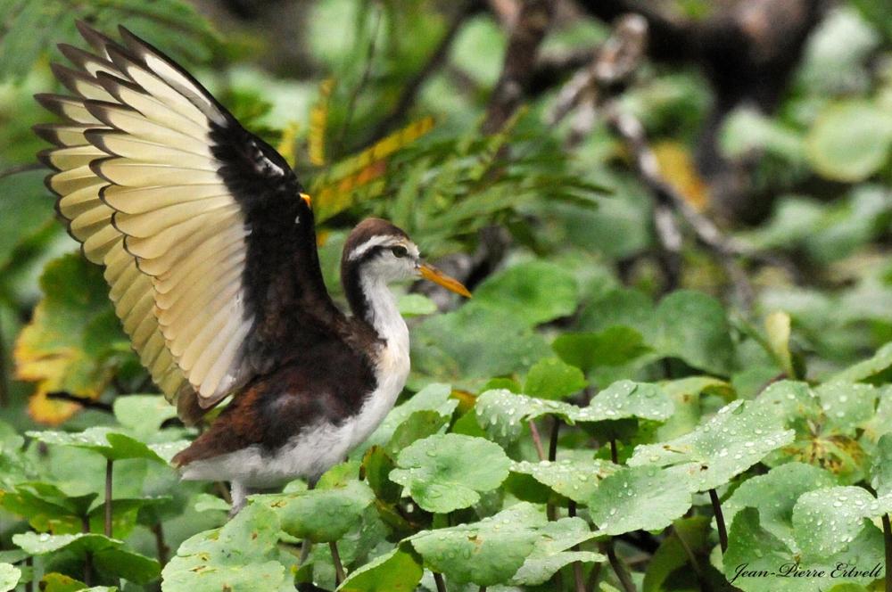 Costa Rica 57