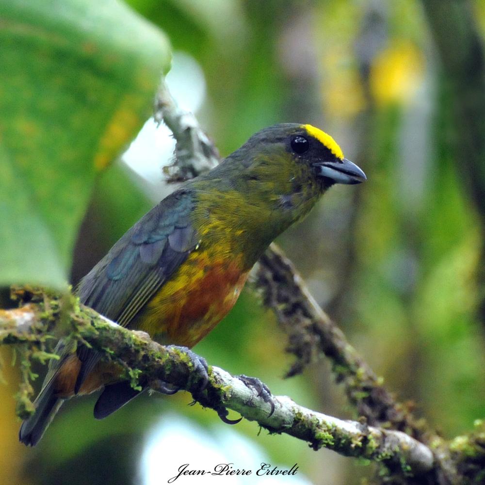 Costa Rica 85