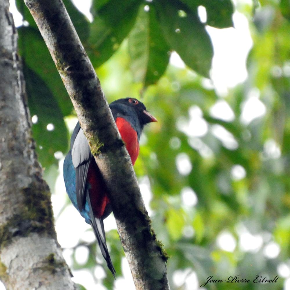 Costa Rica 94