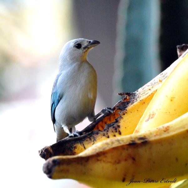 Costa Rica 106