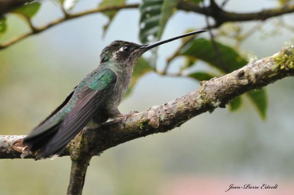 Costa Rica 114