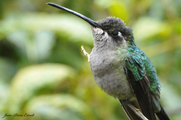 Costa Rica 115