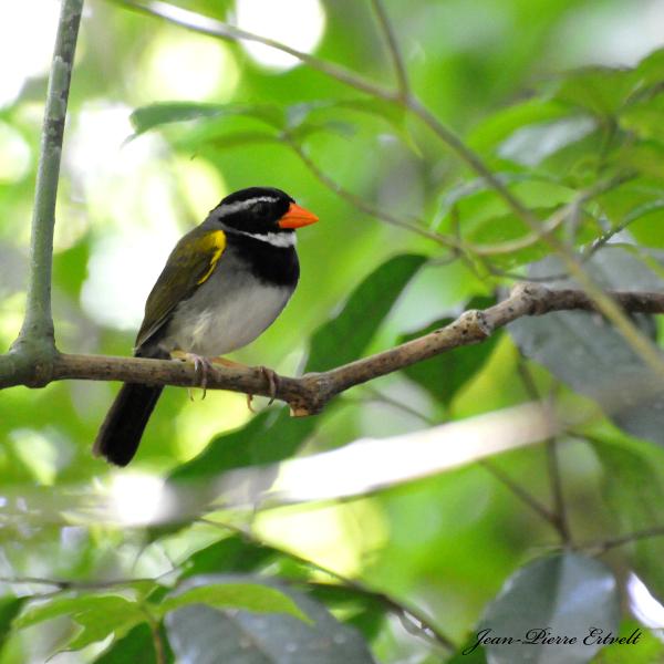 Costa Rica 144