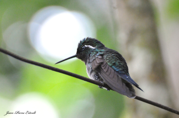 Costa Rica 146