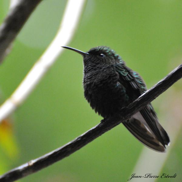 Costa Rica 157