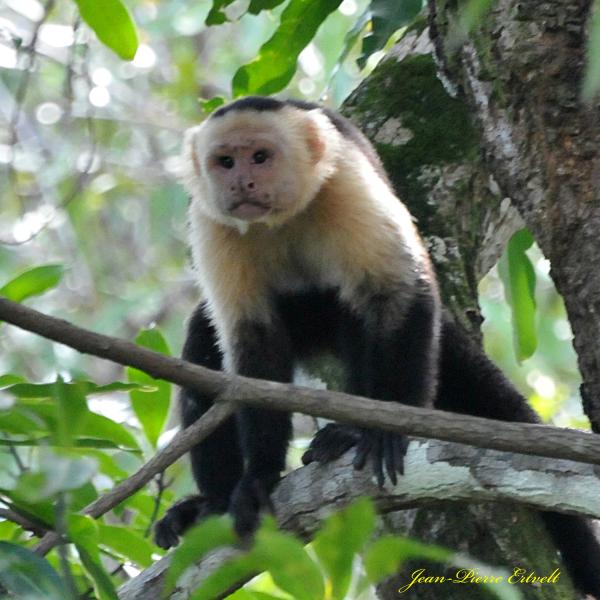 Costa Rica 162