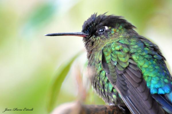 Costa Rica 205