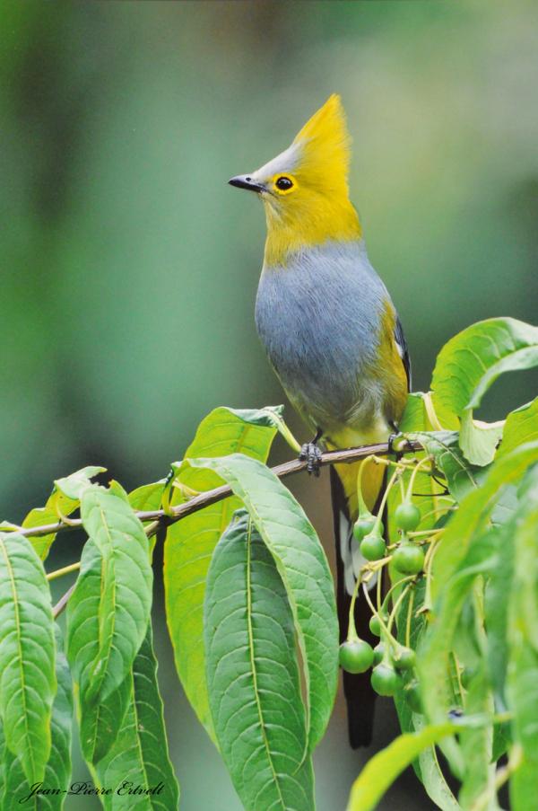 Costa Rica 206