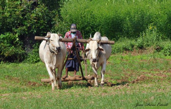 Myanmar 105