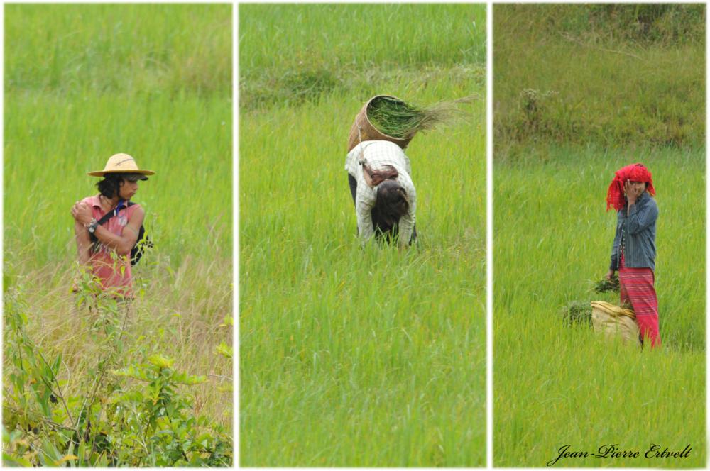 Myanmar 145