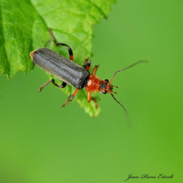 Insecte 1/2
