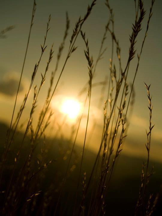 Tomorrow the Green Grass