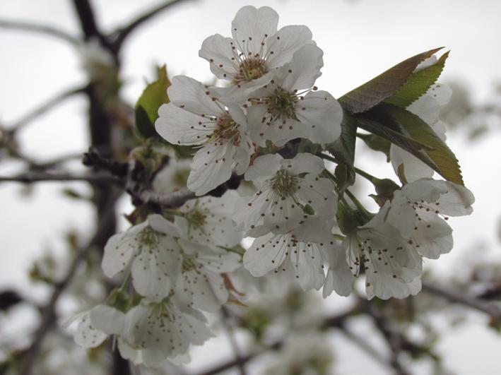 printemps LïlyBakhshi